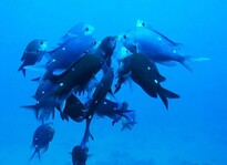 Check out our dive sites - Book online